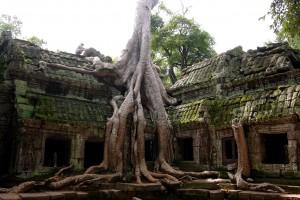 angkor-thom-tomb-raider