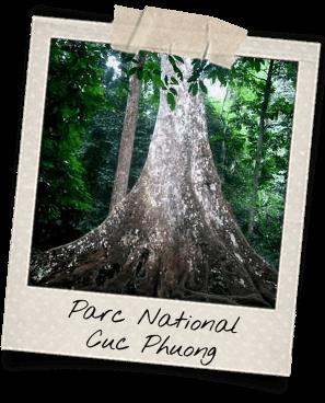 parc national cuc phuong