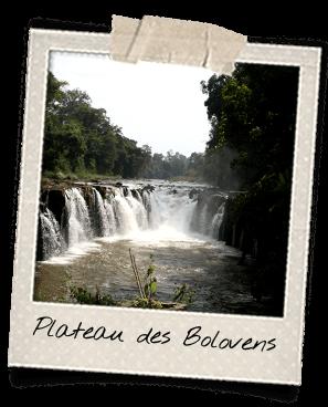 plateau-des-bolovens-laos