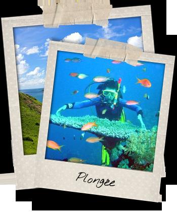 Plongee sous-marine aux iles Cham