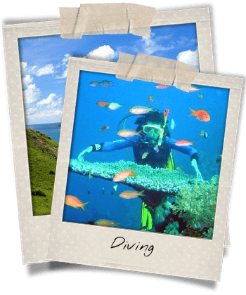 Diving in Cham Island