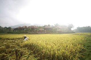 View over the rice paddies