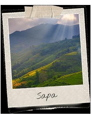 Rizières sous le soleil à Sapa