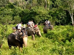 elephant-asia-tourism