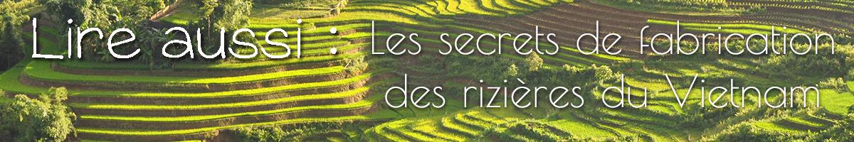 Lire aussi les secrets des rizières du Vietnam