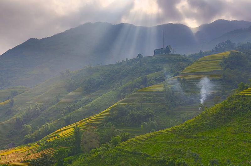 Rayons de soleil sur les rizières du Vietnam