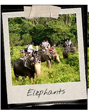 Balade à dos d'éléphant à Dak Lak