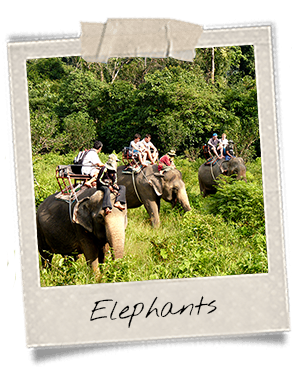 Elephant ride in Dak Lak Province