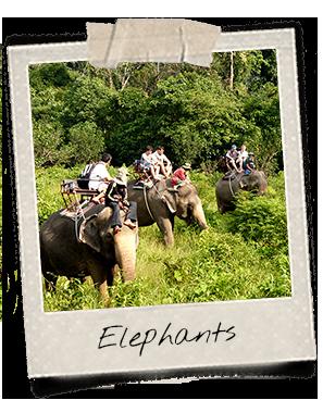 Elephant ride in Dak Lak Province
