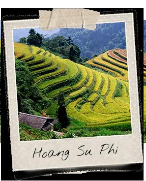 Rizières en terrasse à Hoang Su Phi